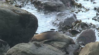 Seals in New Zealand