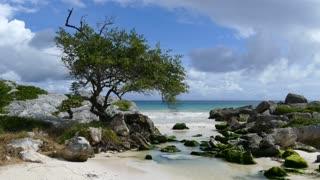 Small bay with rocks and alga at the coast in Tulum Yucatan, Mexico