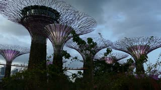 Supertree Grove with purple lights at Gardens by the Bay in Singapore