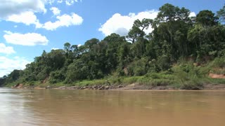 The amazone rainforest view from a boat