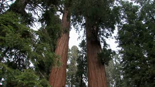 The Giant Sequoia National Monument in California,United States