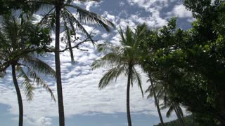Tilt from palm trees to the beach in Mission Beach, Queensland, Australia.