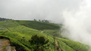 Tilt Pan from misty tea plantations mountain view landscape in Sri lanka