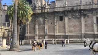 Tilt up from a Horse and carriage in front of the Seville Cathedral in Spain