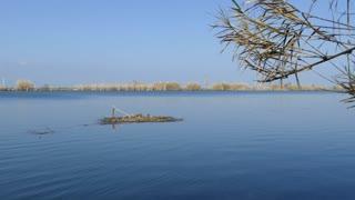Wood floating in a lake at Parc Natural del Delta de l'Ebre in Spain