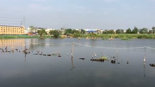 View from the train passing by a lake on the way from Bangkok to Samut sakhon in Thailand