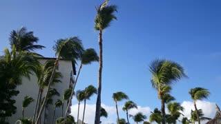 Walking under the palmtrees at Palm Beach on Aruba