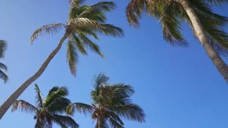 Walking under the palmtrees on Aruba