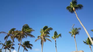 Walking under the palmtrees on Aruba