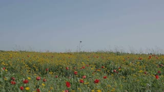 Big field of red and yellow flowers
