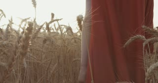Boy with superman cape standing in a golden wheat field.