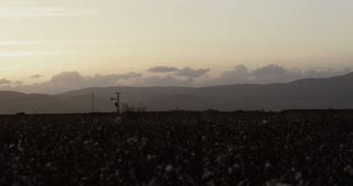 Cotton harvester working in a field during sunset