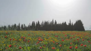 Field of red and yellow flowers against the sun