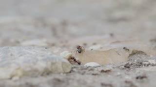Macro shot of ants working