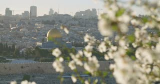 The temple mount in old city Jerusalem with a blossoming Almond tree