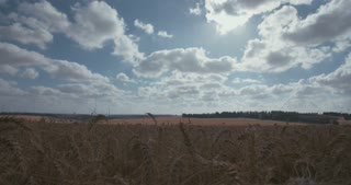 Time lapse of golden wheat field with clouds in the sky