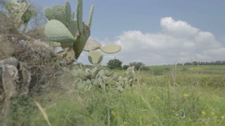 Tracking shot from green hills to a cactus