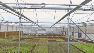 Aerial footage from inside a large greenhouse with flowers