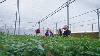 Three agronomists standing in a flower greenhouse looking around