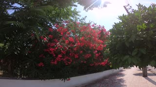 Beautiful view of red flowers