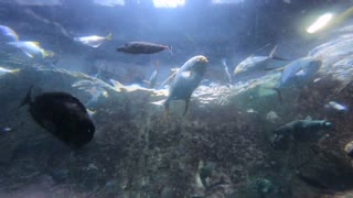 The aquarium & Beautiful fish