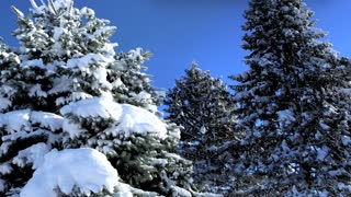 Happy Holidays Christmas Winter Snow Trees Celebrate 3 D Animation