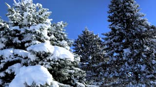 Winter Trees Snow Cold Nature Scene Word 3 D Animation