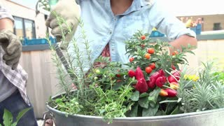 Couple Planting Rooftop Garden Together In Slow Motion