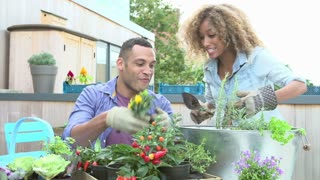 Couple Planting Rooftop Garden Together