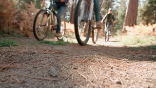 Four friends riding past on bikes in a forest, low angle