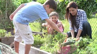 Mother And Children Working On Allotment Together