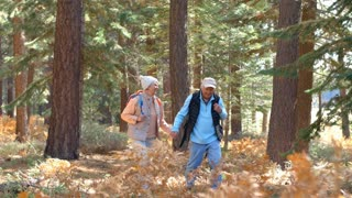 Panning shot of senior couple walking on sunlit forest trail