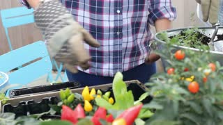 Two Women Putting Plants Into Containers In Rooftop Garden