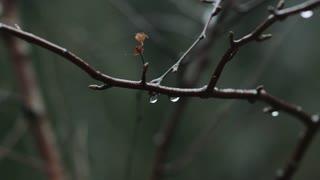 rain drops on tree in soft slow motion