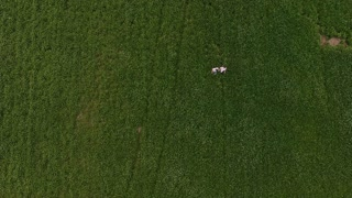 The couple in the field hugs and turns around. Aerial 4k