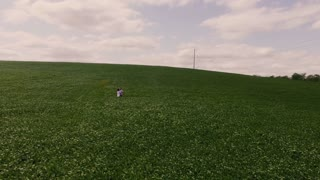 The couple in the field hugs and walking. Aerial 4k