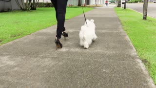 1 Businesswoman Commuting To Office With Her Dog