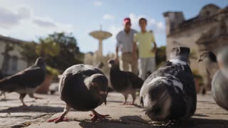 2-Grandfather And Grandchild Feeding Pigeons With Bread On Vacations