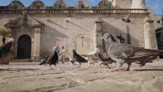 4-Grandpa And Grandson Boy Running Pigeons Flying Slowmotion