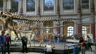 8 Berlin City Germany Europe Natural History Museum People Dinosaurs