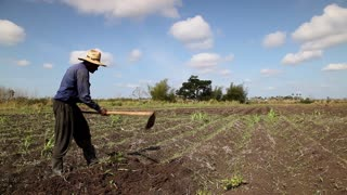Agriculture and men working in the field, black peasant with hat hoeing the ground in farm in Guines, Cuba. Wide shot
