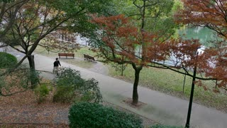 City park in Kanayama-cho district in Hiroshima, Japan, Asia. Young Japanese man walking in the morning and trees with fall foliage
