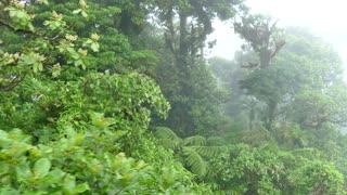 Costa Rica Monteverde Cloud Forest Jungle Nature Rainforest Sky Tram