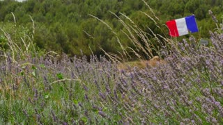 French flag flying in a lavender field in France. National symbol in the wind
