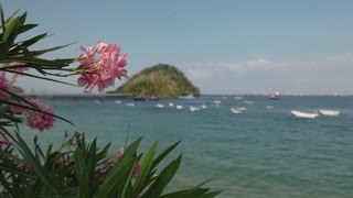 Isla Taboga Panama Central America Focus On Flowers And Harbour