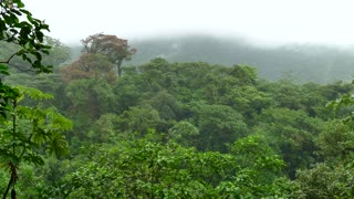 Landscape Nature Rainforest Jungle Tenorio Volcano National Park Costa Rica