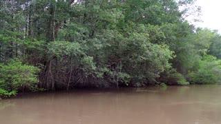 Mangrove Forest Swamp Mangroves Jungle Rainforest Trees River Costa Rica
