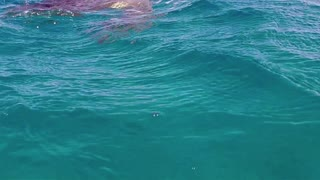 Marine life with sea turtle, animal swimming in tropical ocean, Abu Dabbab near Marsa Alam, Red Sea. Egypt. Natural environment, nature, ecology, sea