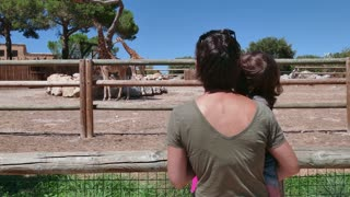 Mom and daughter looking at giraffes in zoo. Mother and child contemplating African wildlife in zoological gardens, wild animals with people and visitors