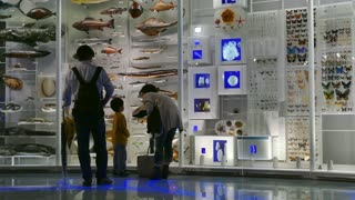 National Museum of Nature and Science, Tokyo, Japan, Asia. People, tourists, visitors during visit, family looking at animals in collection. Exhibition, gallery, show, science, nature